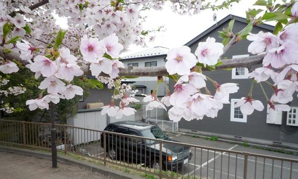 桜と記念撮影.jpg